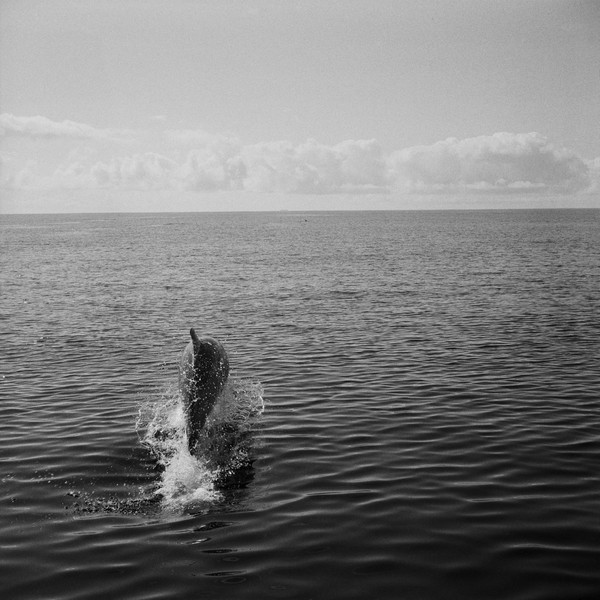 Thierry Secretan - Dolphin in the Azores - A dolphin breaches south of Pico in the Azores, Portugal, 2006 - protected by IMATAG