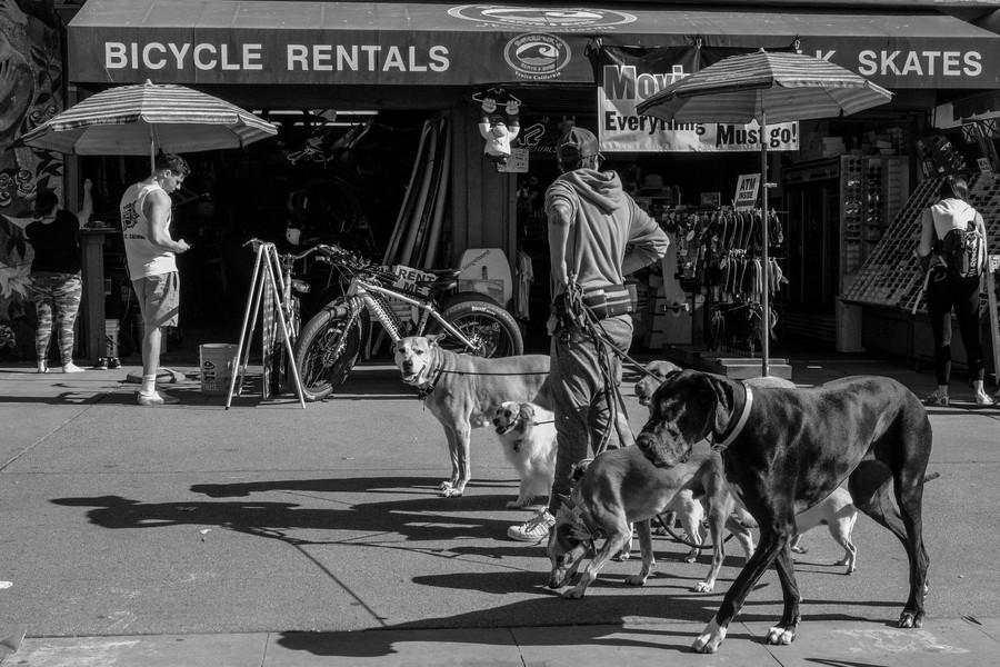 © Thierry Secretan - Los Angeles 2017 - Walking the dogs on Ocean Front Walk - protected by IMATAG