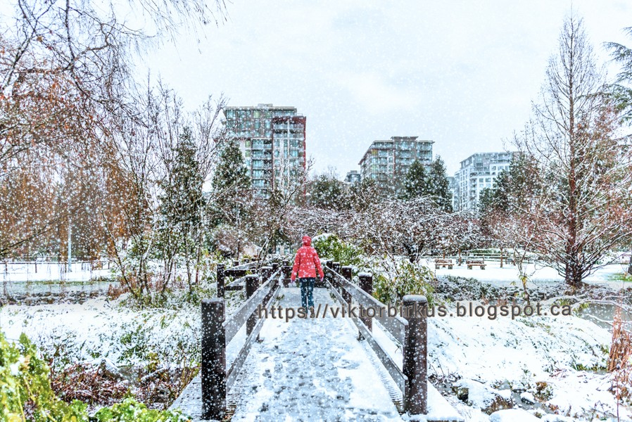 www.viktorbirkus.blogspot.ca - In winter, in a snowfall, a woman in a red jacket walks the bridge towards modern, many storey houses - On a snowy day in the winter, a woman in a red jacket walks across a bridge among snow-covered green trees and bushes, toward modern, many st... - protected by IMATAG