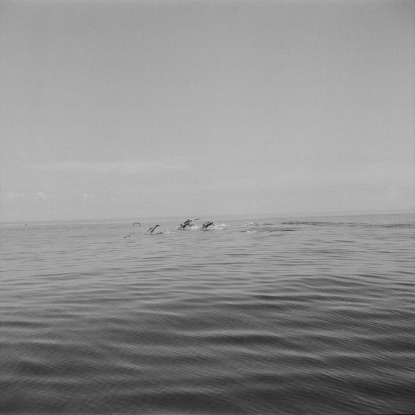 Thierry Secretan - Dolphins south of Pico - A pod of dolphins breaches south of Pico, Azores, Portugal, 2008 - protected by IMATAG